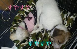 2012112011520000.jpg