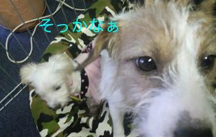 2012112011530000.jpg