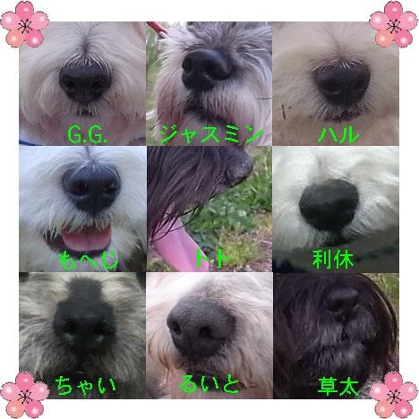 鼻.jpg